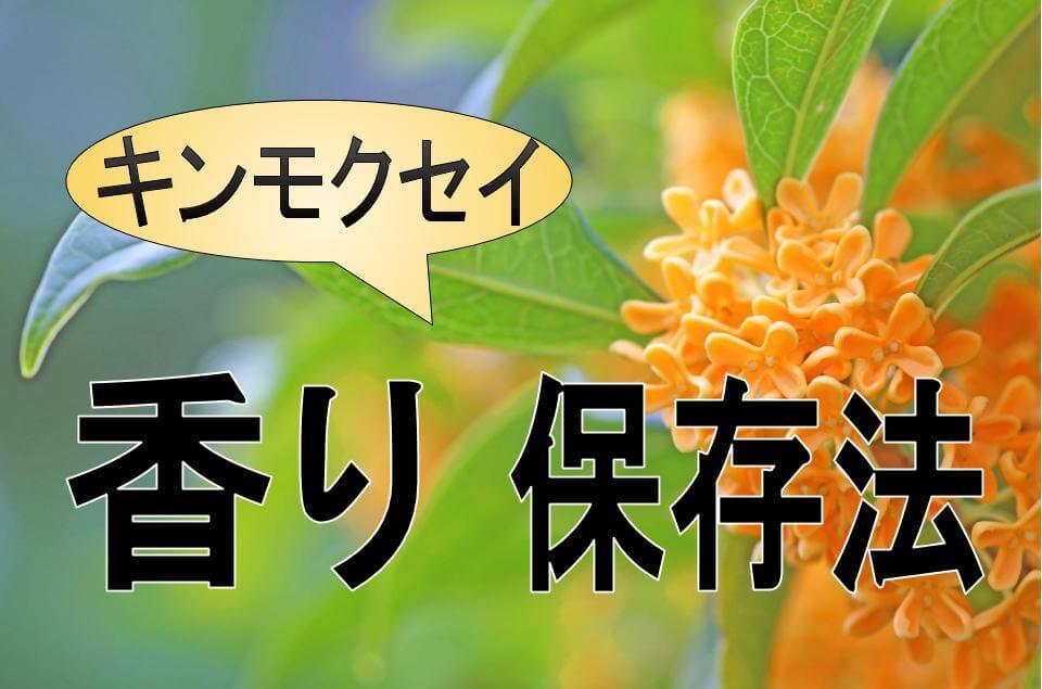 金木犀 キンモクセイ 香り保存